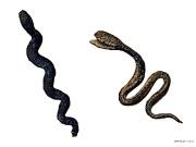34 Змеи